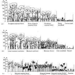 Amazon Rainforest Layers Diagram Christmas Tree Light Wiring 4 Climate And Vegetation Forest Fragmentation Pinterest