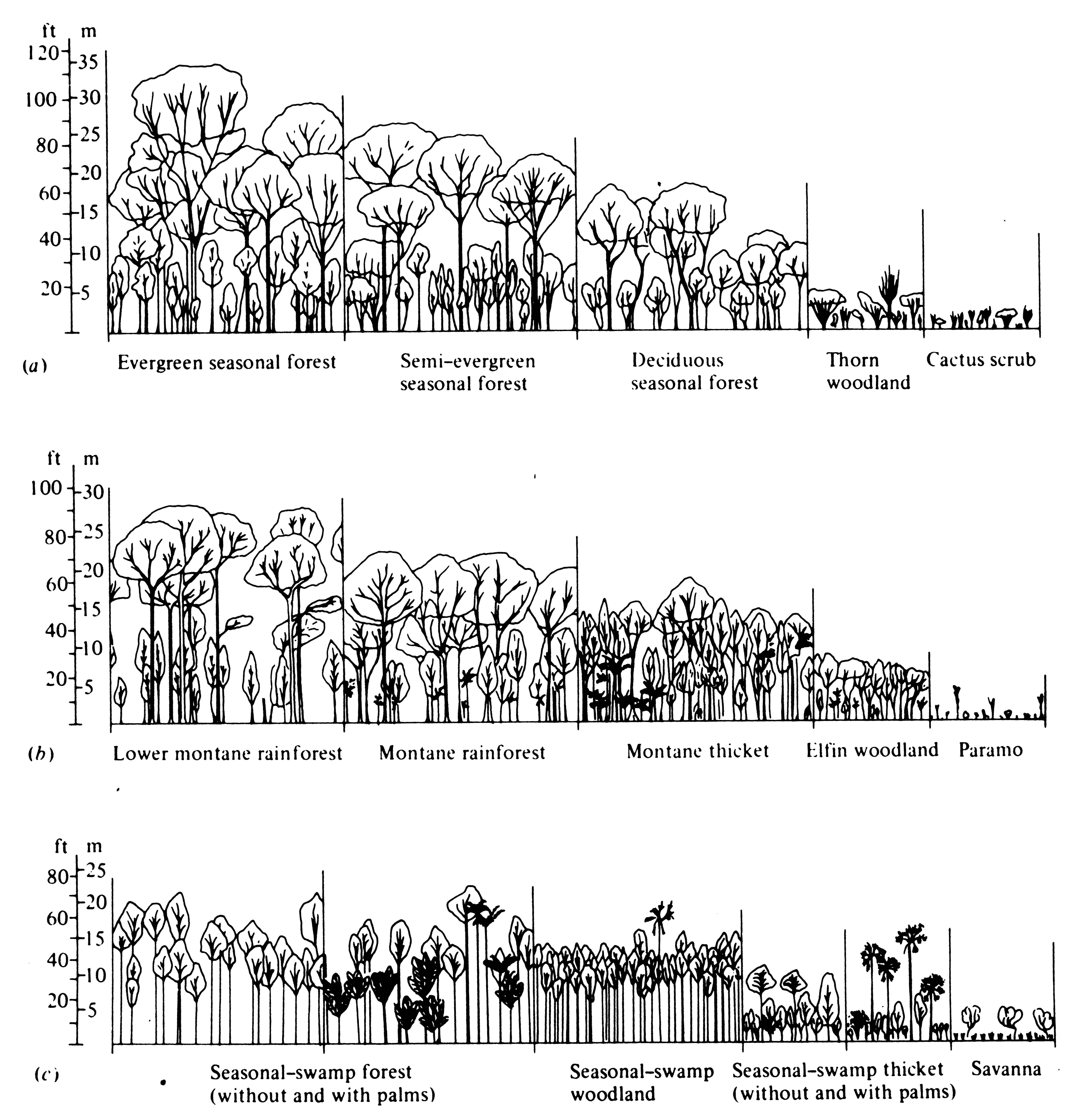 diagram of a tropical forest 1999 f150 ignition wiring 4 climate and vegetation fragmentation pinterest