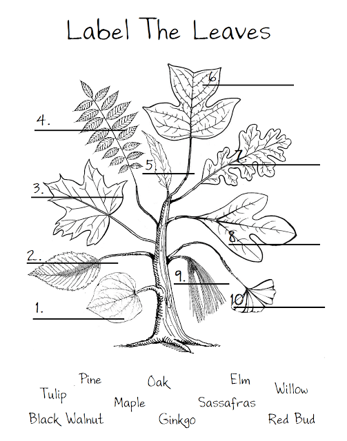 Leaf Worksheet...just to show the different shapes