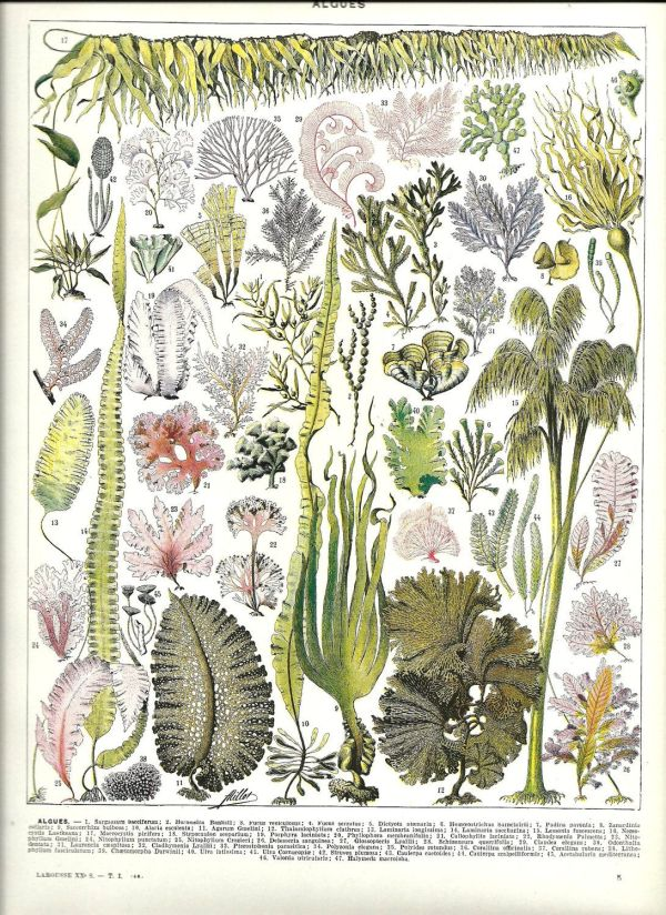 French Botanical Illustration
