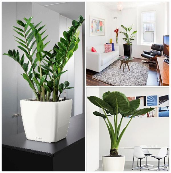 Decorating With Plants Indoors Speak Your Mind Cancel Reply