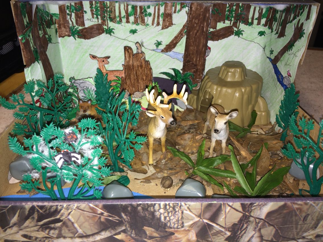 4th Grade Science Forest Ecosystem Diorama Project