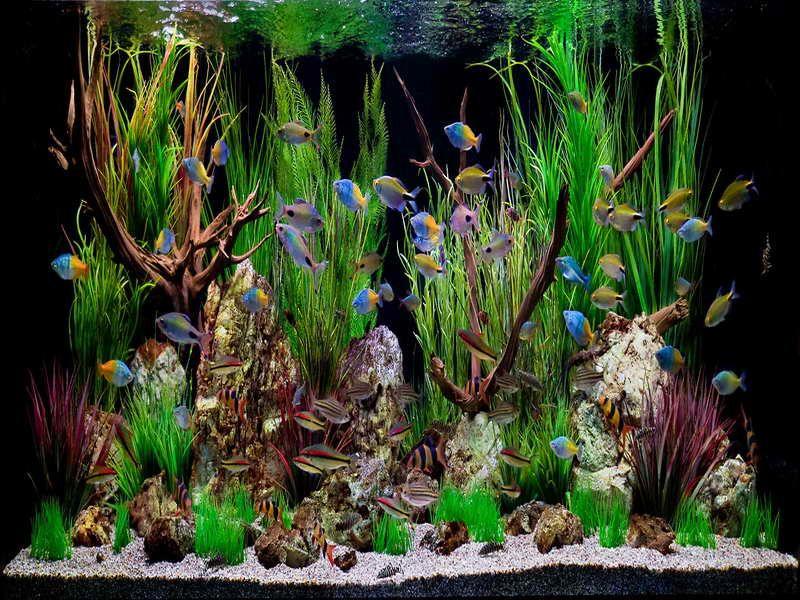 Fish Aquarium Decorations on Pinterest