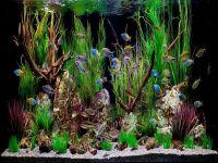 Fish Aquarium Decorations on Pinterest | Aquarium ...
