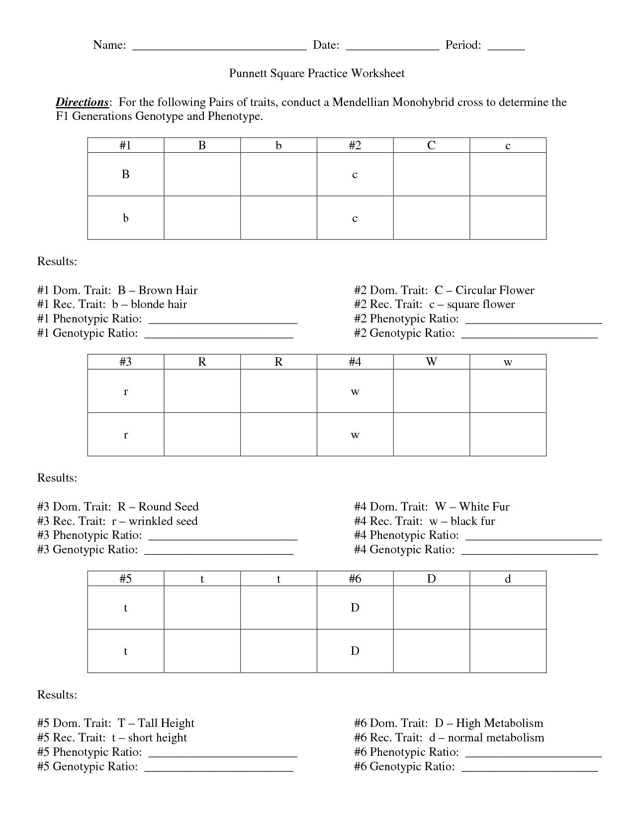 Worksheet Punnett Square Worksheet 1 Answer Key