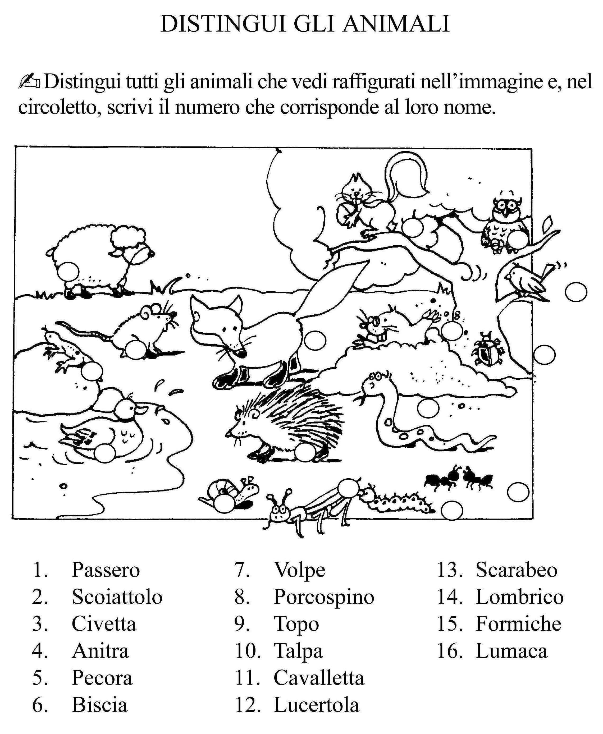 Distingui Gli Animali Classe Seconda