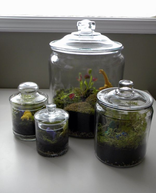 20 Venus Flytrap Plant Enclosed Terrarium Pictures And Ideas On