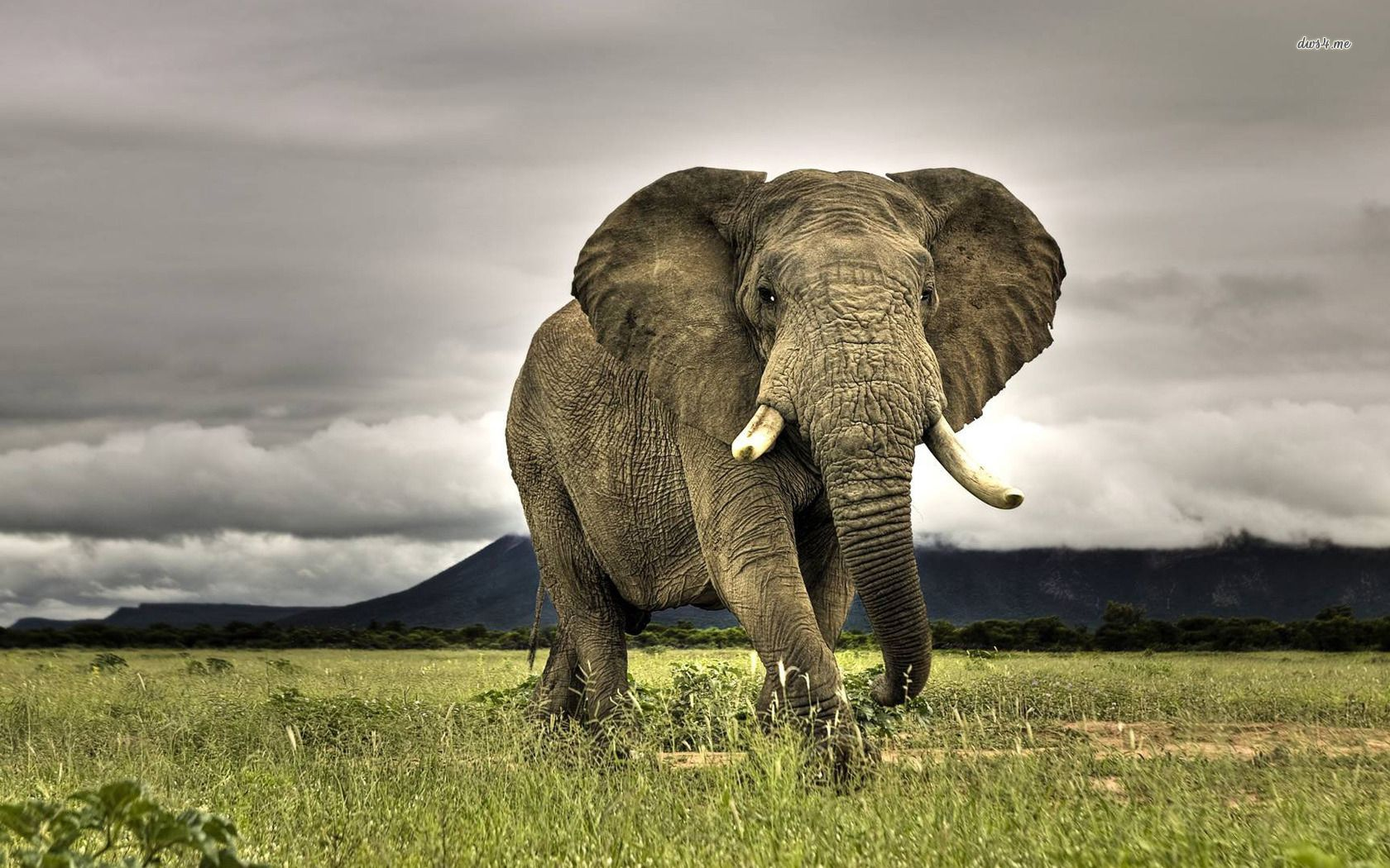 african print wallpaper hd - google search   i <3 nature