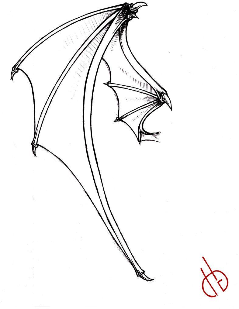 Bat Skeleton With Labels