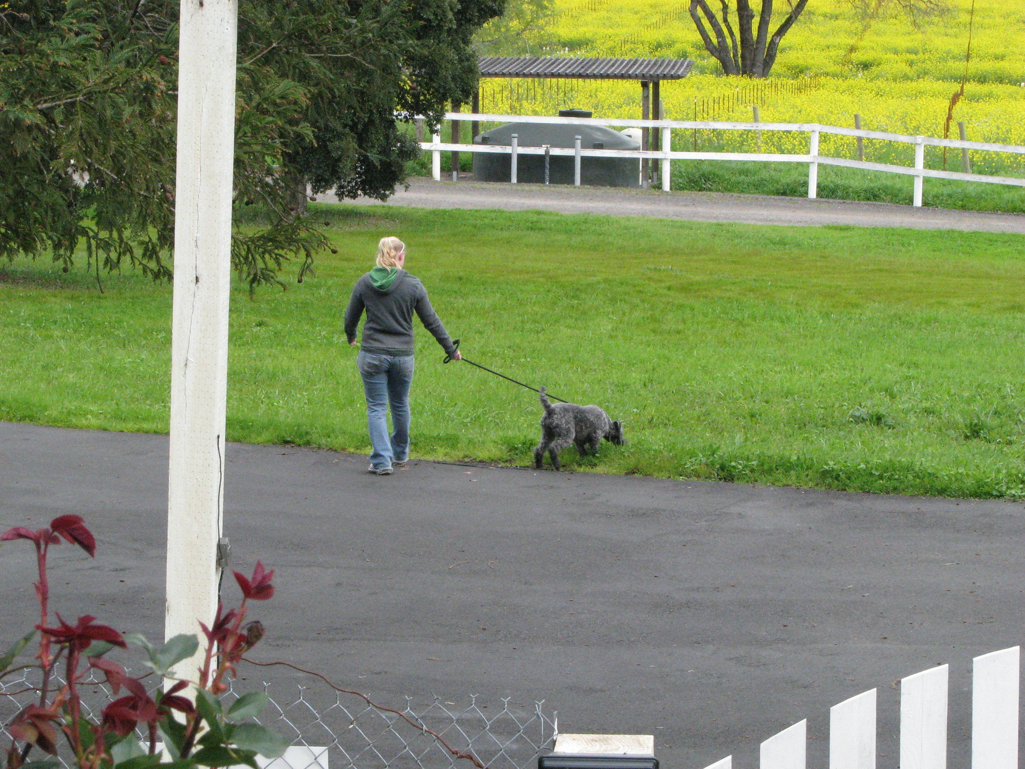 The Paw Spa Pet Resort in Omaha NE Animals Pinterest
