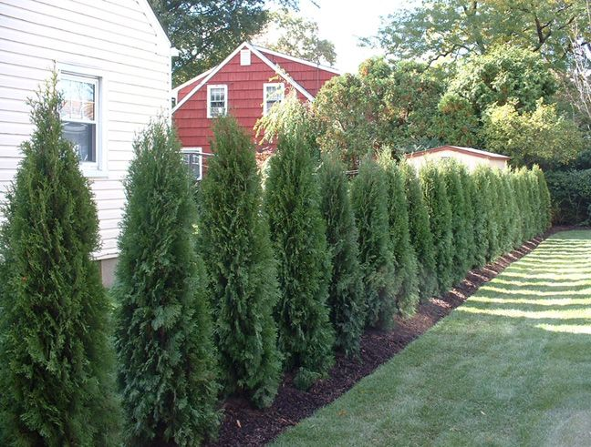 Backyard Landscape Designs – Creating A Natural Privacy Screen