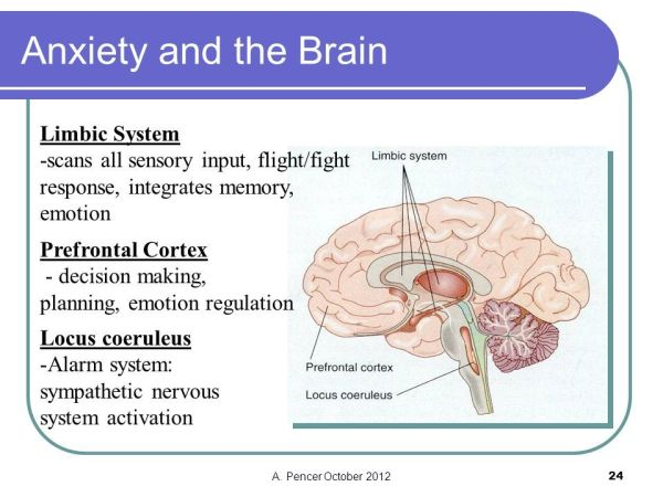 Image result for limbic system brain fight or flight