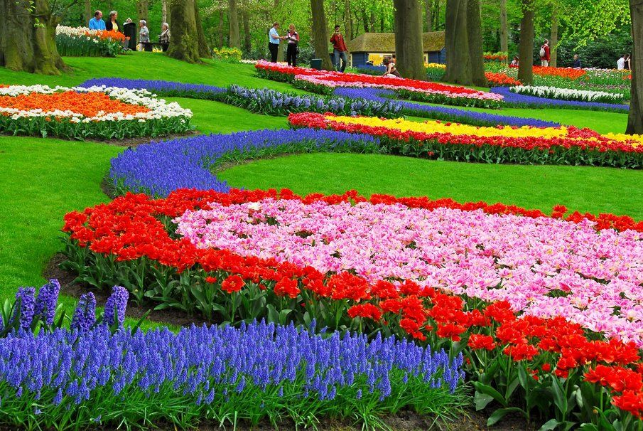 Tulip Garden Wallpaper Flower Power Pinterest Tulips Garden