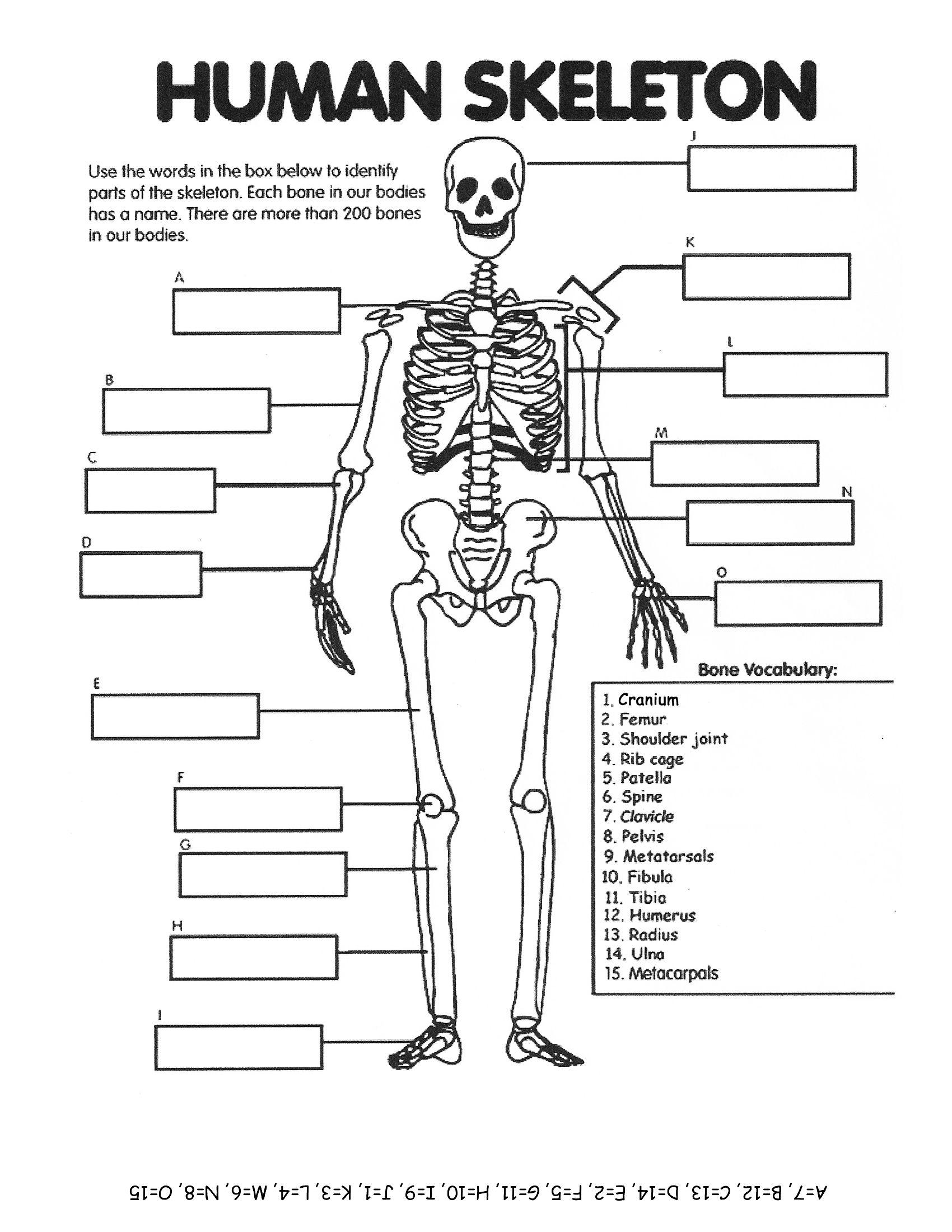 No L K Hum N Skelet Element Ry W Ksheet Homeschool He Lth