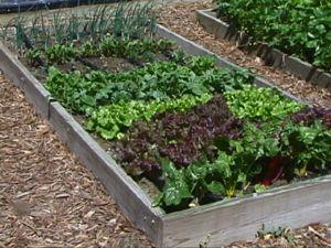 Best Mulch For Garden Daylilies In Australia Best Mulches For