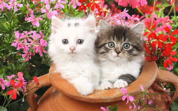 cats hd wallpapers catalog cat