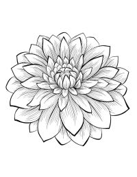 Dahlia : color one of the most beautiful flowers, From the ...