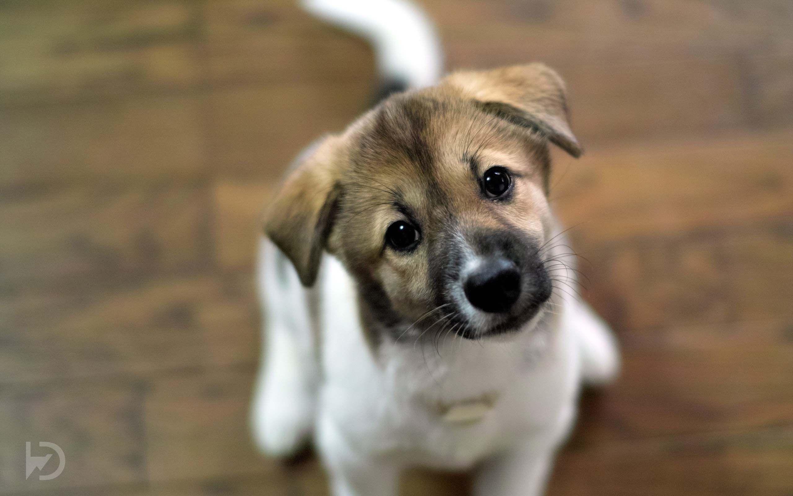 cute dogs wallpapers | download wallpaper | pinterest | dog