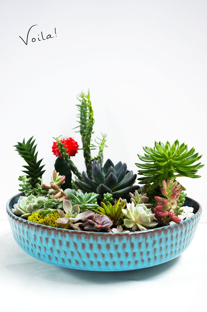 How To Make A Succulent Garden DIY QuinnCooperStyle Com