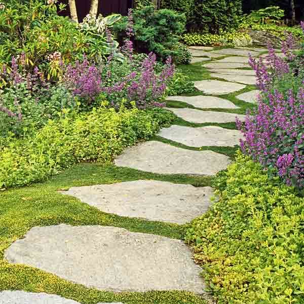 All About Groundcover Steep Between And Plants