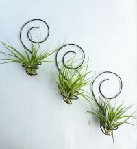 Reserved for shannon0401 Three wire Air plant holders by ...