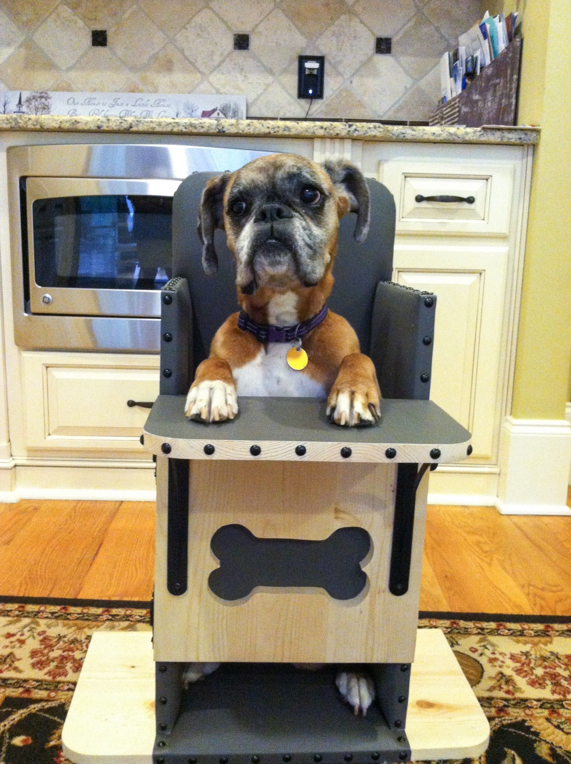 dog high chair spider web target boxer energetic and funny barking fur babies