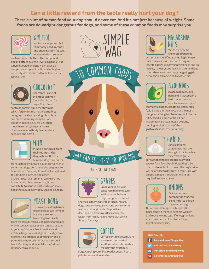 Complete List Of Foods Toxic To Dogs