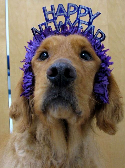 Happy New Years Dog News Years Pets Pinterest Dog