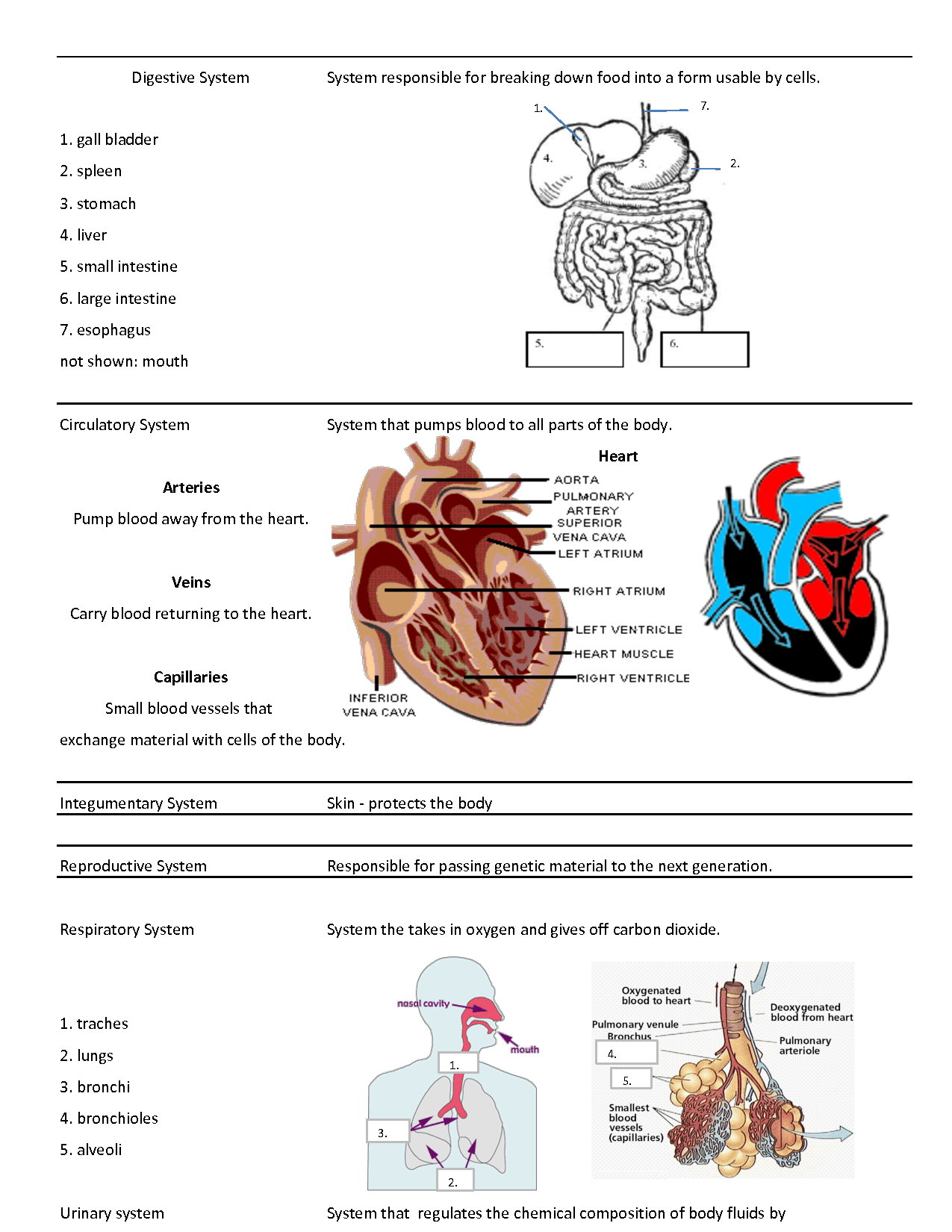 Anatomy And Physiology Holes Zemlin