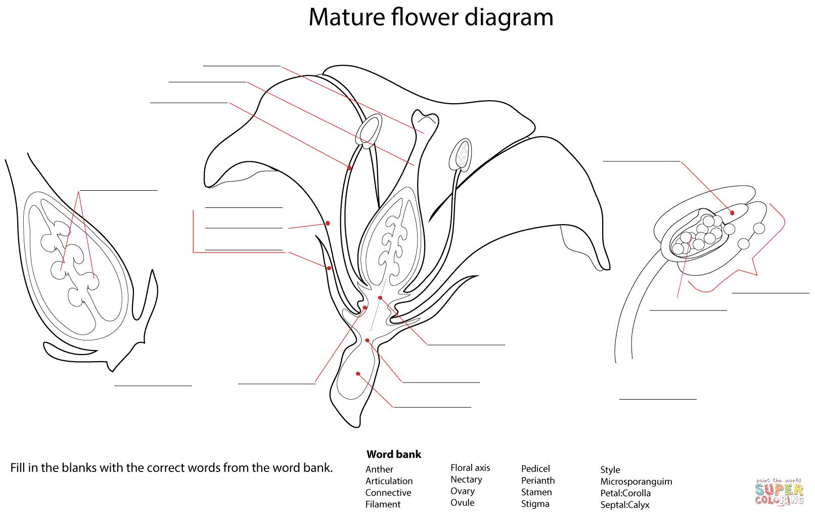 Label Plant Parts Printable Sketch Coloring Page