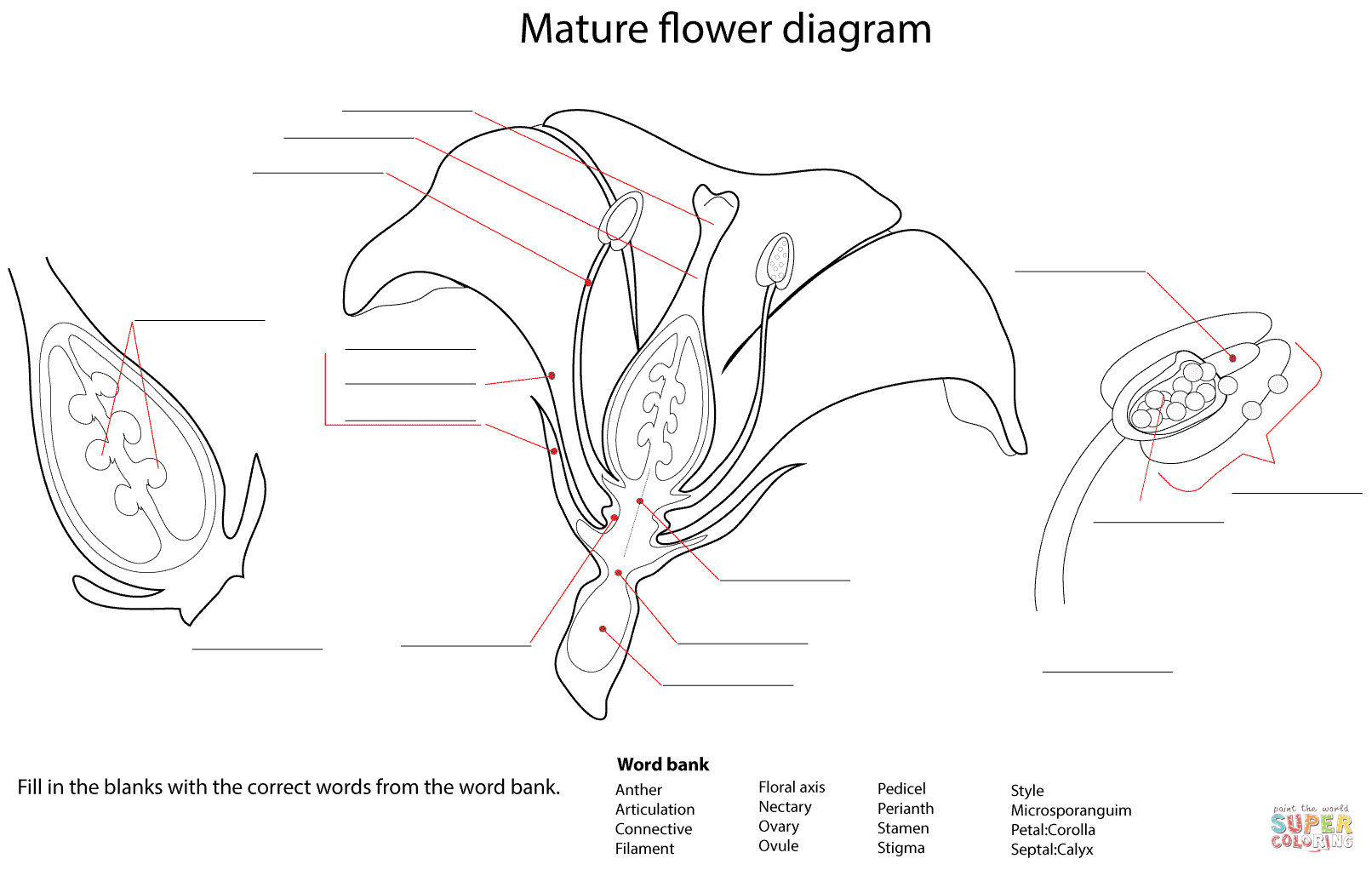what is a diagram in science 1999 yamaha banshee wiring flower worksheet coloring page free printable