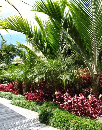 Layered Sub Tropical Palm Garden Seed Landscapes Garden Photos Of