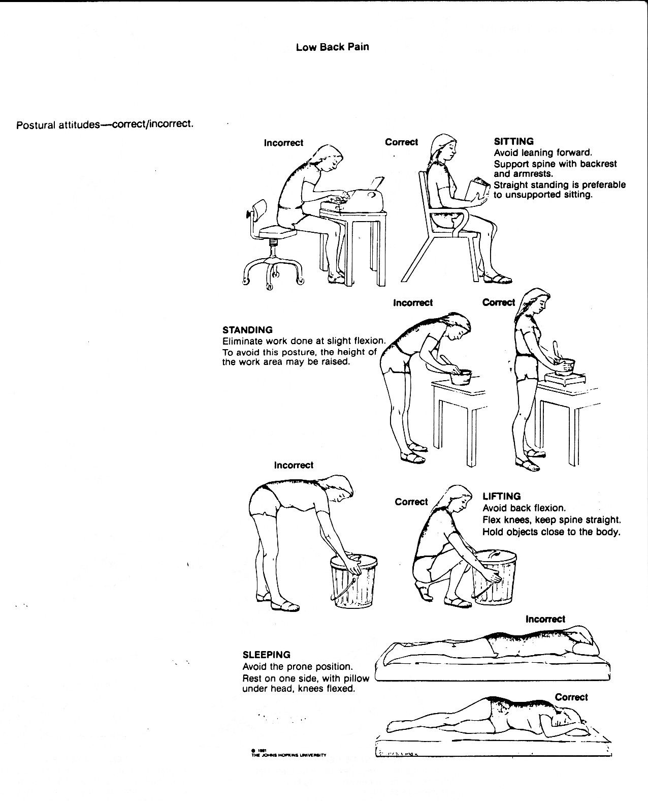 lower back exercises diagram ez wiring 21 circuit harness muscle pain flexibility and posture