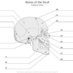 Facial Bones Diagram Not Labeled Warn Atv Winch Solenoid Wiring Unlabeled Skeleton Print Out | Human Skull Pinterest Anatomy ...