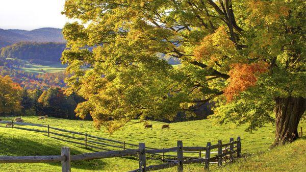 Fall Scenery Desktop Backgrounds