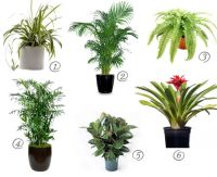 (Cat safe) house plants for cleaner air | Rubber plant ...
