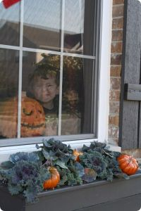 Decorating Window Boxes For Fall | Decorative Design