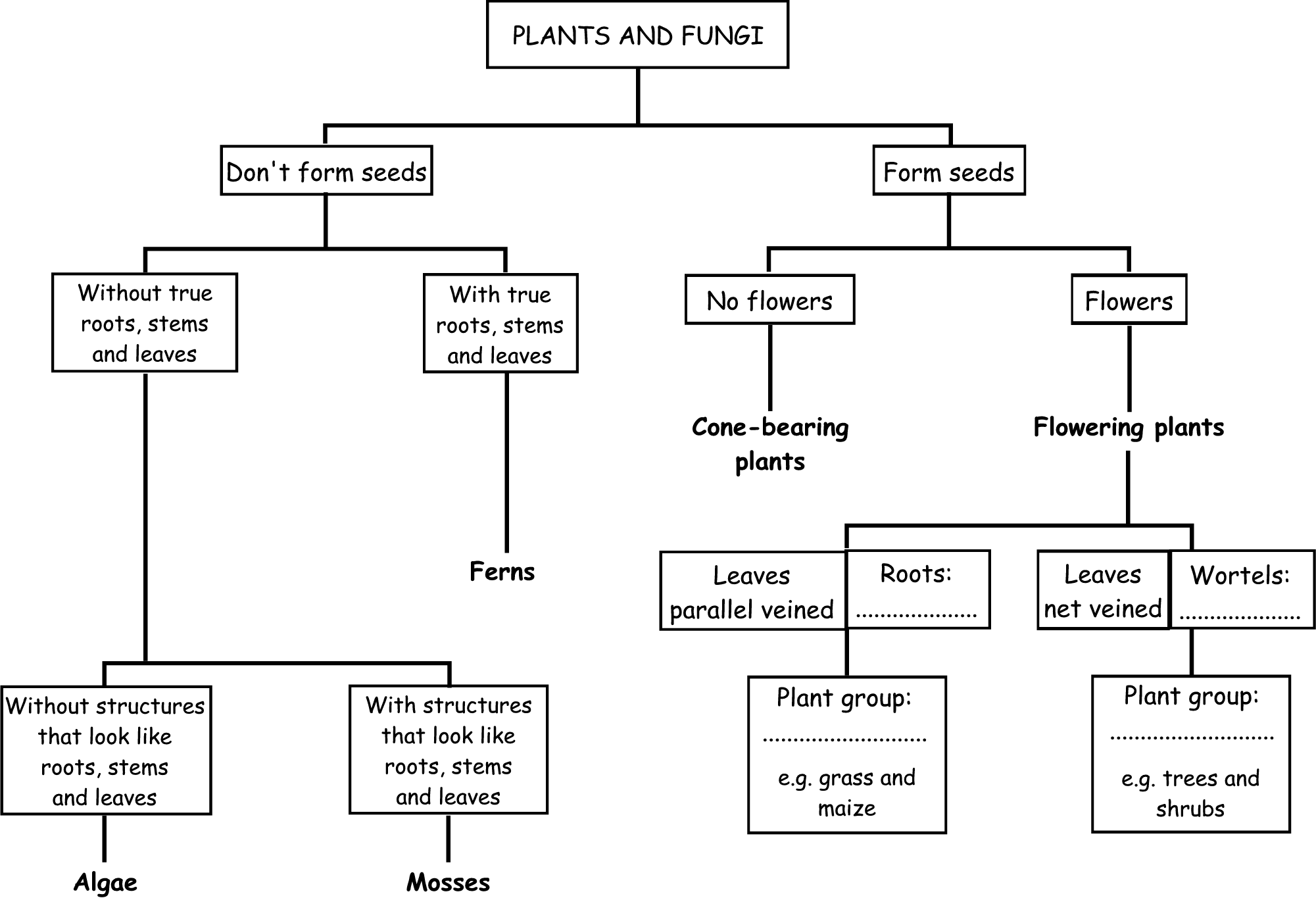 Plants And Fungi Flow Chart
