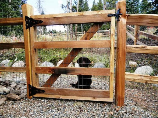 How to repairhow to install split rail fence gate how