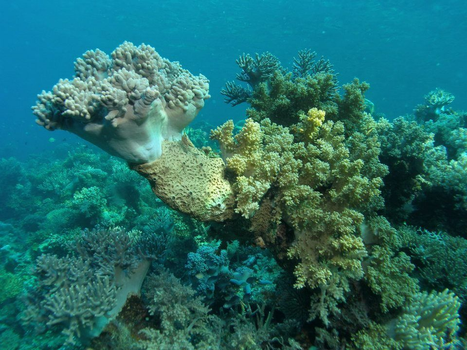 Coral reefs are underwater structures made from calcium ...