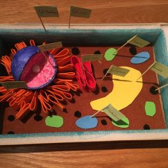 Palisade Cell Diagram Plant How To Draw A Wiring Best 25 43 Ideas On Pinterest Photosynthesis