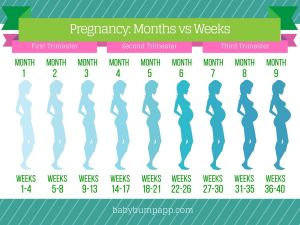 Progression Chart | Baby Things | Pinterest | Pregnancy, Babies and Baby planning