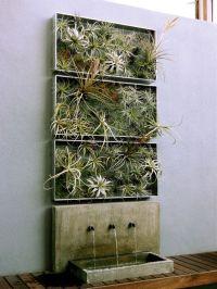 home-decor-ideas-plants-air-plant-airplantman | Living ...