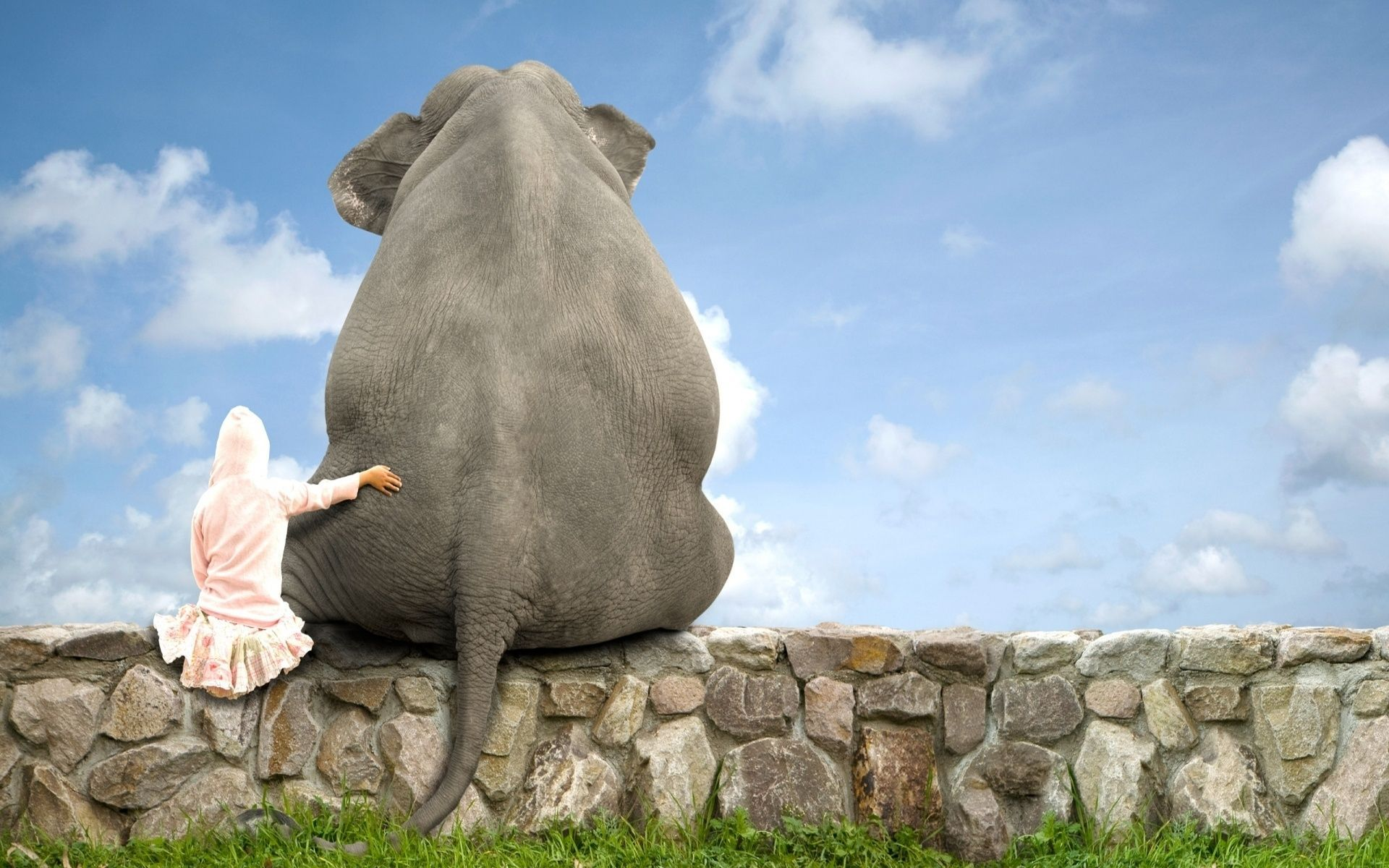 elephant wallpaper best hd wallpaper 2260×1502 elephant wallpaper