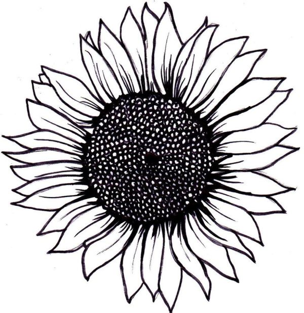 simple sunflower drawing wallpapers