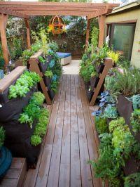 Deck Design Ideas | Tropical plants, Container gardening ...