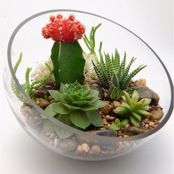 Cactus Succulent Half Moon Glass Terrarium 1 190 UAH ❤ Liked On