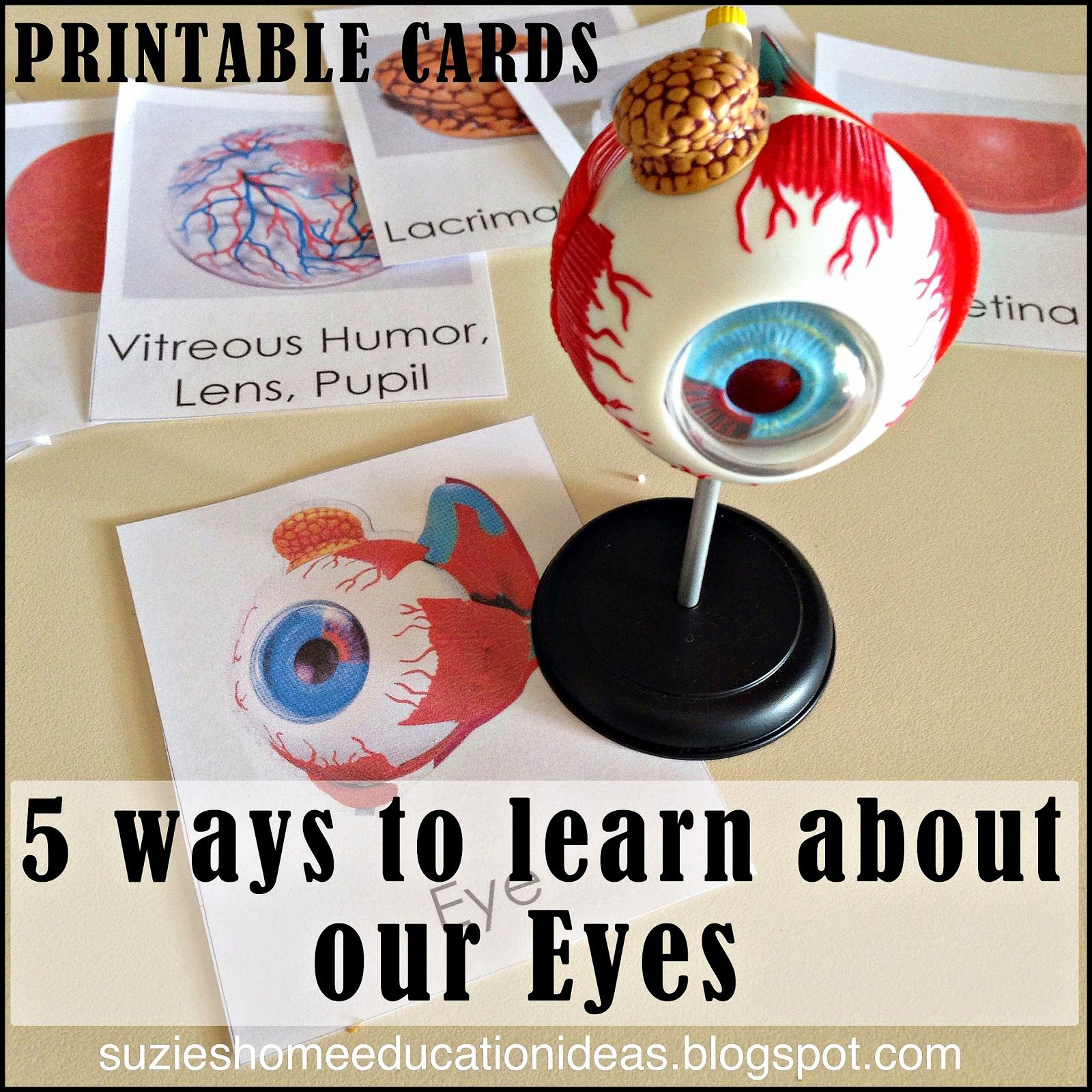 5 Ways To Learn About Our Eyes