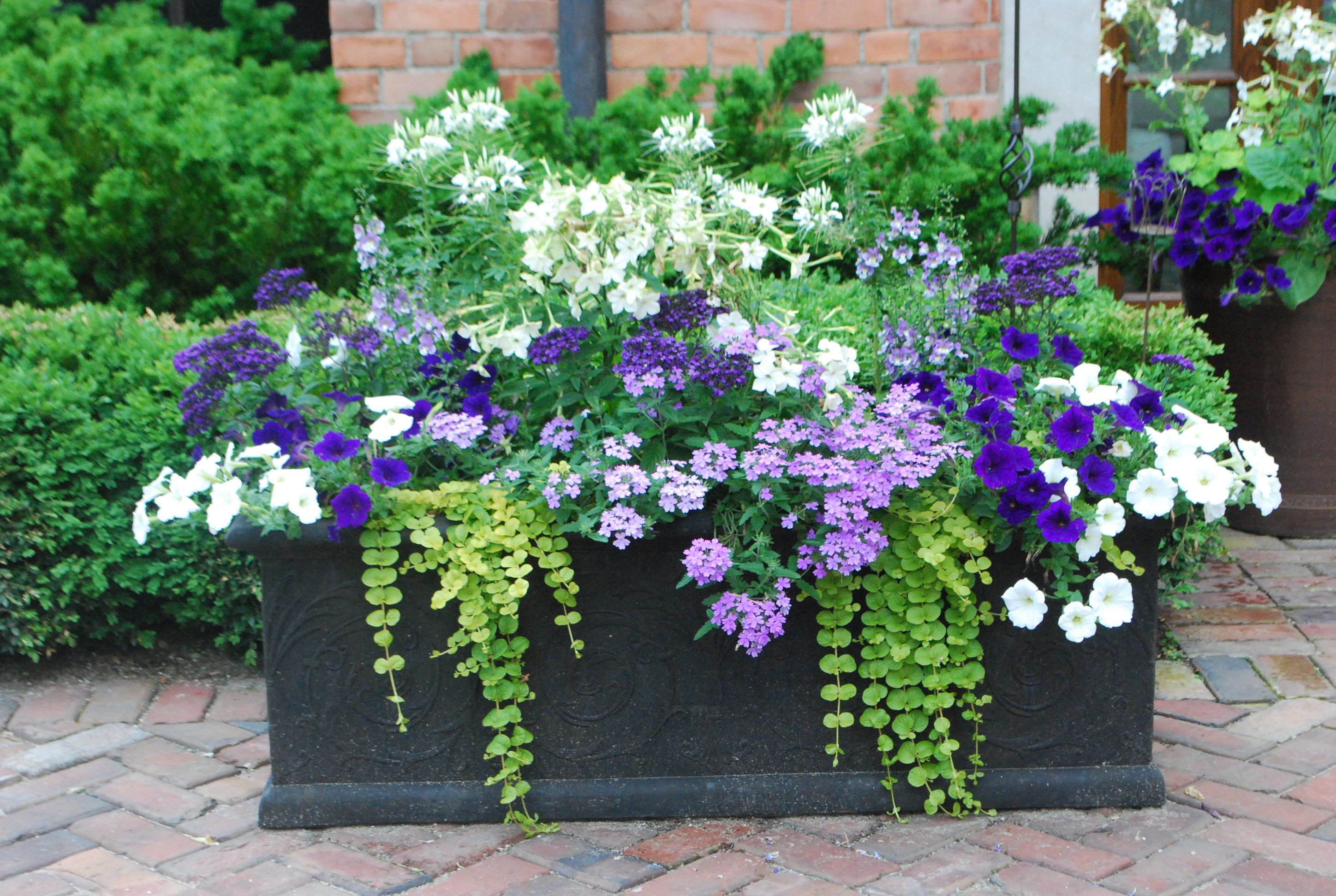 Do You Plant Flowers On Mother's Day? (Good Life Of Design