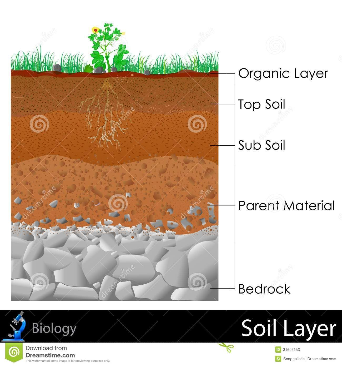 Science Soil Drawing Layers